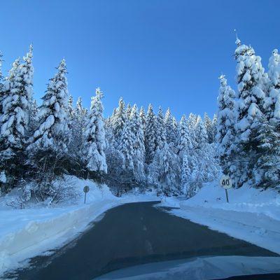 Cesta na Bohinjsko sedlo, kot včasih, ko so bile dobre zime