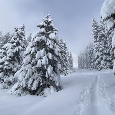 Špura in snežane