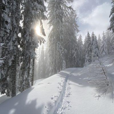 Cesta proti Jureževi planini